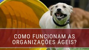 organizções ágeis